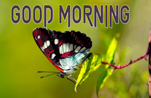 NEW GOOD MORNING IMAGES  PICTURES WALLPAPER FREE DOWNLOAD