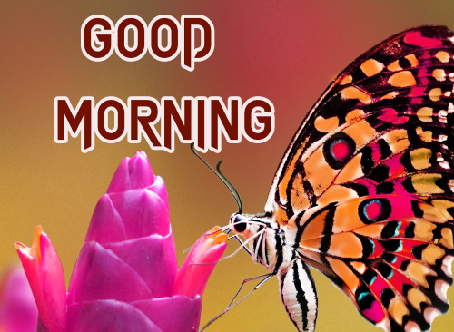NEW GOOD MORNING IMAGES WALLPAPER PICS FREE HD FOR WHATSAPP
