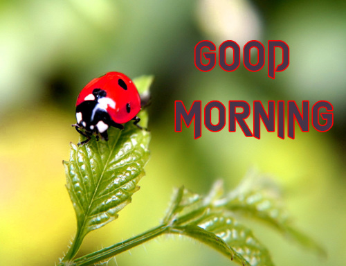 NEW GOOD MORNING IMAGES PHOTO WALLPAPER DOWNLOAD