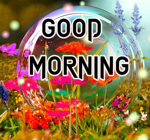 NEW GOOD MORNING IMAGES PHOTO PICS FREE DOWNLOAD