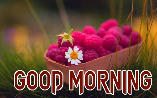 NEW GOOD MORNING IMAGES PICS PHOTO FREE DOWNLOAD