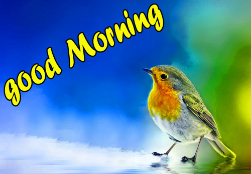 TODAY GOOD MORNING IMAGES PICS WALLPAPER HD DOWNLOAD