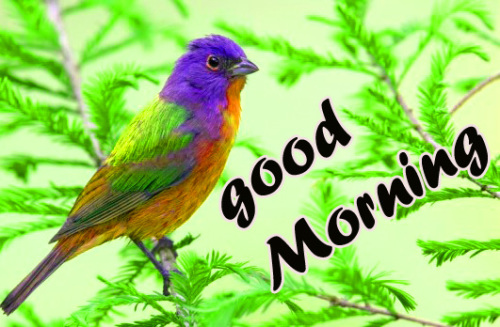 TODAY GOOD MORNING IMAGES PHOTO PICTURES FREE HD