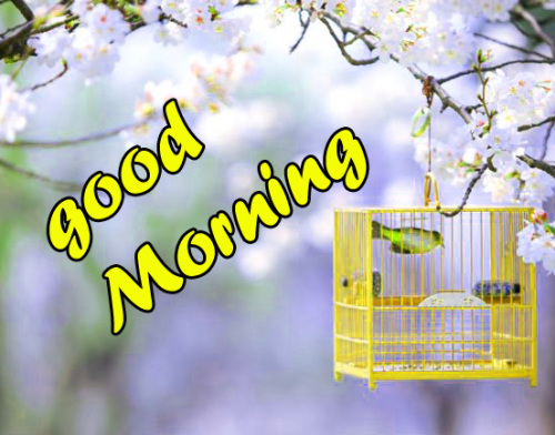 TODAY GOOD MORNING IMAGES WALLPAPER PICS DOWNLOAD