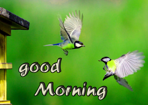 TODAY GOOD MORNING IMAGES PICTURES PHOTO HD DOWNLOAD