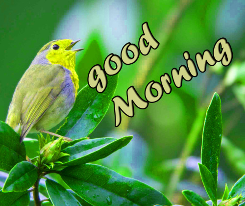 TODAY GOOD MORNING IMAGES PHOTO PICS DOWNLOAD