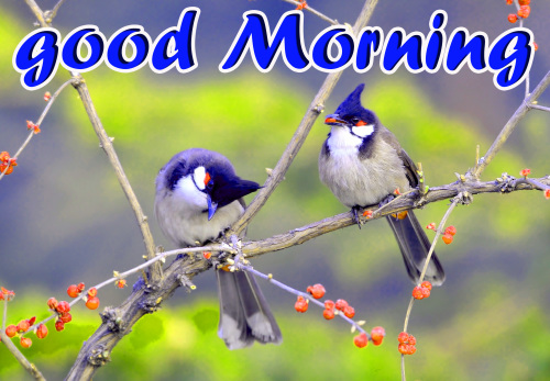TODAY GOOD MORNING IMAGES WALLPAPER PHOTO FOR WHATSAPP