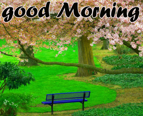 TODAY GOOD MORNING IMAGES WALLPAPER PHOTO FREE DOWNLOAD