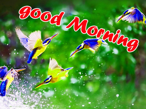 TODAY GOOD MORNING IMAGES WALLPAPER PHOTO DOWNLOAD