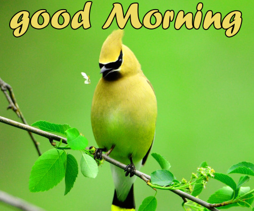 TODAY GOOD MORNING IMAGES PICTURES PICS DOWNLOAD