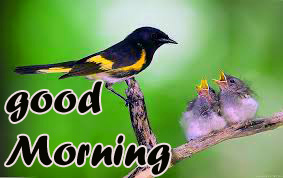 TODAY GOOD MORNING IMAGES WALLPAPER PHOTO PICS DOWNLOAD