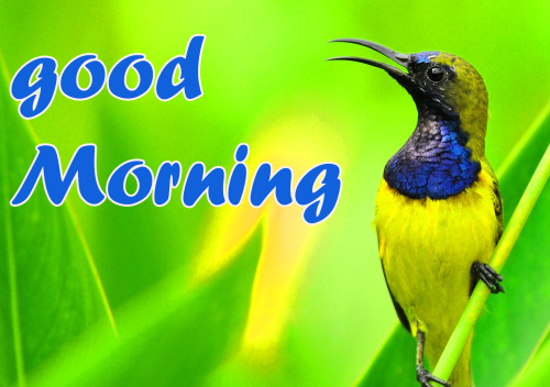 TODAY GOOD MORNING IMAGES PHOTO WALLPAPER HD