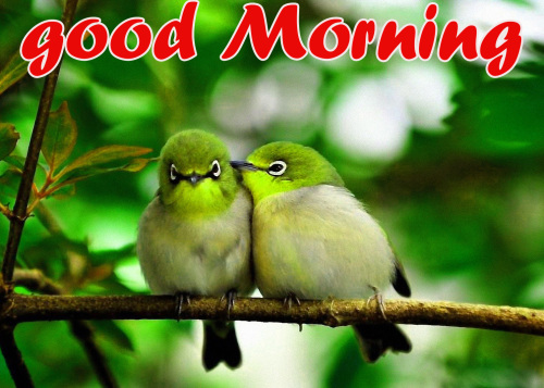 TODAY GOOD MORNING IMAGES WALLPAPER PICTURES PHOTO FREE HD