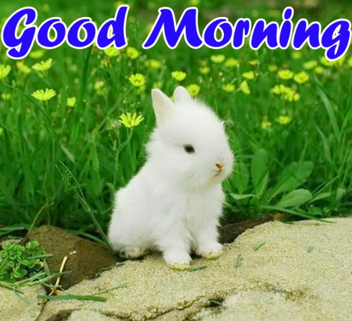 VERY CUTE GOOD MORNING IMAGES WALLPAPER PHOTO HD