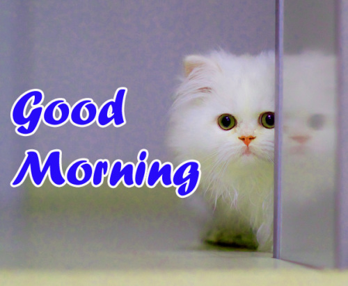 VERY CUTE GOOD MORNING IMAGES PICTURES PICS FREE HD