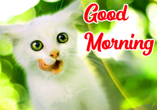 VERY CUTE GOOD MORNING IMAGES PICS PICTURES FREE HD