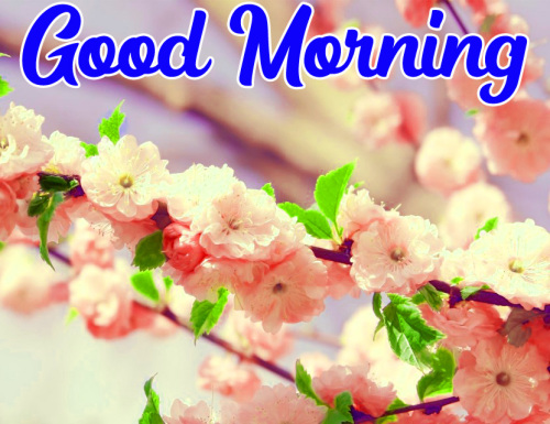 VERY CUTE GOOD MORNING IMAGES PICTURES PICS DOWNLOAD