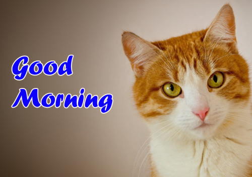 VERY CUTE GOOD MORNING IMAGES PICTURES PICS FOR FRIENDS