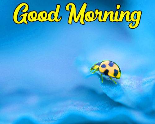 VERY CUTE GOOD MORNING IMAGES PICS PHOTO HD