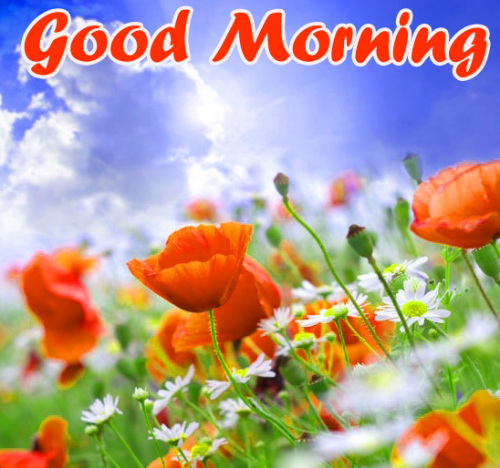 VERY SWEET GOOD MORNING IMAGES WALLPAPER PHOTO FREE HD