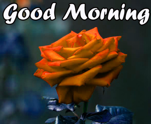 VERY SWEET GOOD MORNING IMAGES WALLPAPER PICS FREE HD