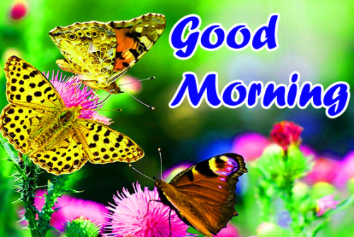 VERY SWEET GOOD MORNING IMAGES PHOTO WALLPAPER FREE HD