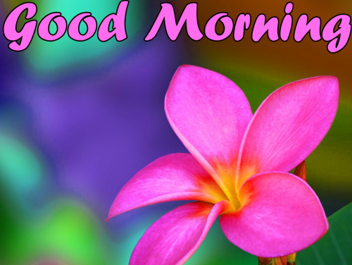 VERY SWEET GOOD MORNING IMAGES PICTURES PICS DOWNLOAD