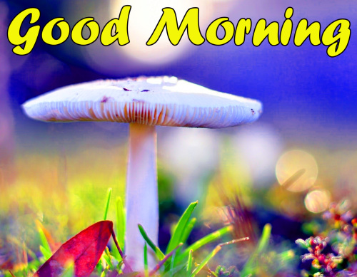 BEST GOOD MORNING IMAGES PICS PHOTO HD