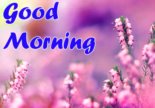 BEST GOOD MORNING IMAGES PICTURES PHOTO DOWNLOAD