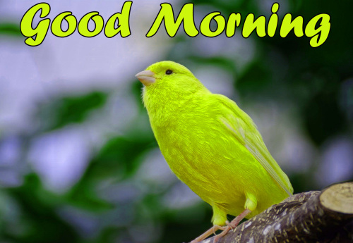 BEST GOOD MORNING IMAGES PHOTO PICS FREE DOWNLOAD