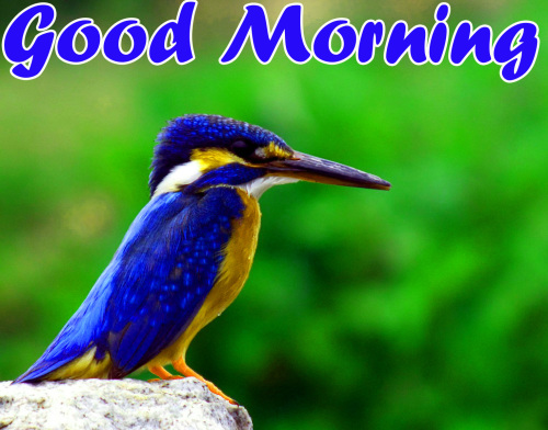 BEST GOOD MORNING IMAGES WALLPAPER PICTURES FREE DOWNLOAD