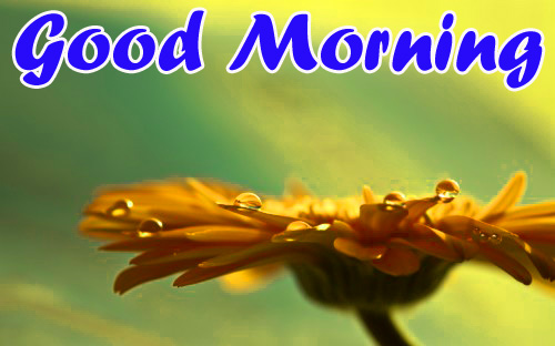 BEST GOOD MORNING IMAGES WALLPAPER PHOTO DOWNLOAD