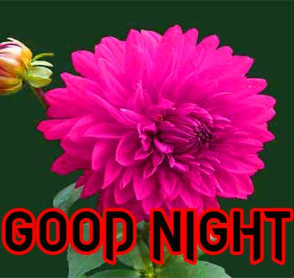 GOOD NIGHT IMAGES PICTURES PICS FREE HD DOWNLOAD