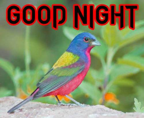 GOOD NIGHT IMAGES PHOTO WALLPAPER FOR FACEBOOK
