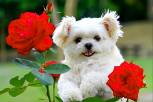 BEST DP IMAGES FOR WHATSAPP PIC WITH CUTE PUPPY