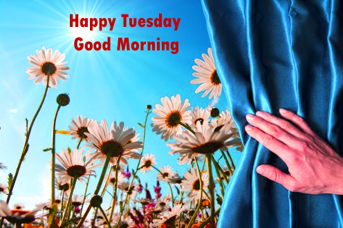 Good-Morning-Sunshine-Tuesd