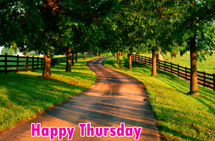 Good Morning Thursday Pics Images Wallpaper Photo Pics HD Free Download