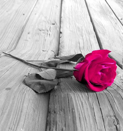 Red Rose Profile Images Wallpaper Photo Pictures Pics HD Free Download