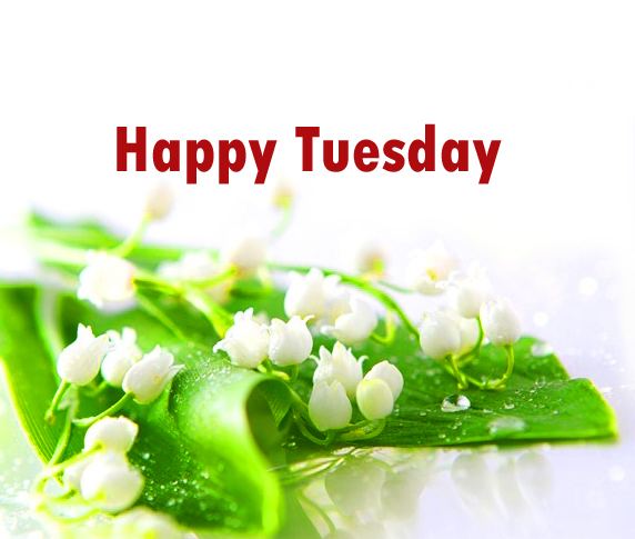 tuesdaypictures