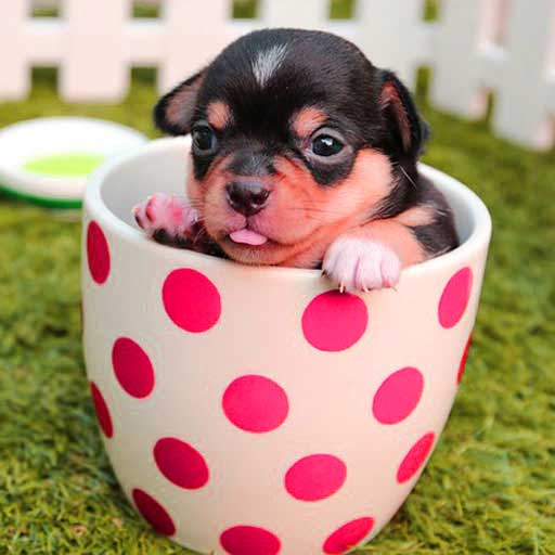 cute-photo-download