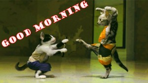 Funny Good Morning Photo Wallpaper Pictures HD Download