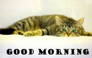 Funny Good Morning Photo Wallpaper Pictures Download