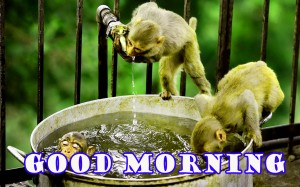 Funny Good Morning Wallpaper Photo Images HD Download