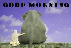 Funny Good Morning Wallpaper Pictures Images Free HD Download