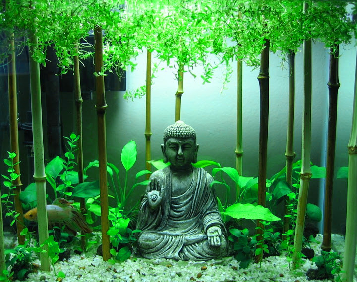 Gautama Buddha Pictures Images Photo HD Download