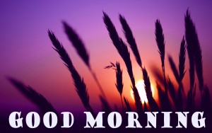 Good Morning Pictures Wallpaper Pics Images HD