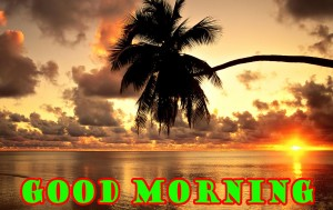 Good Morning Pictures Wallpaper Pics Images HD Download