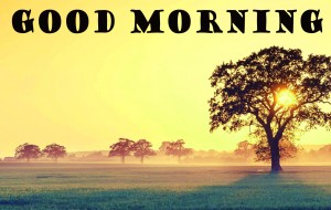 Good Morning Pictures Wallpaper Pics Pictures HD Download