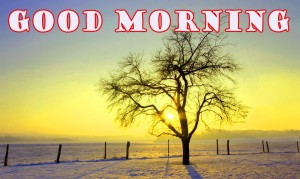 Good Morning Wallpaper Pictures Images Download In HD