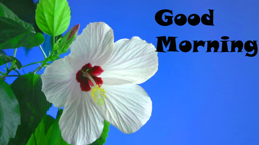 Good Morning Images Wallpaper Pictures Download with flower